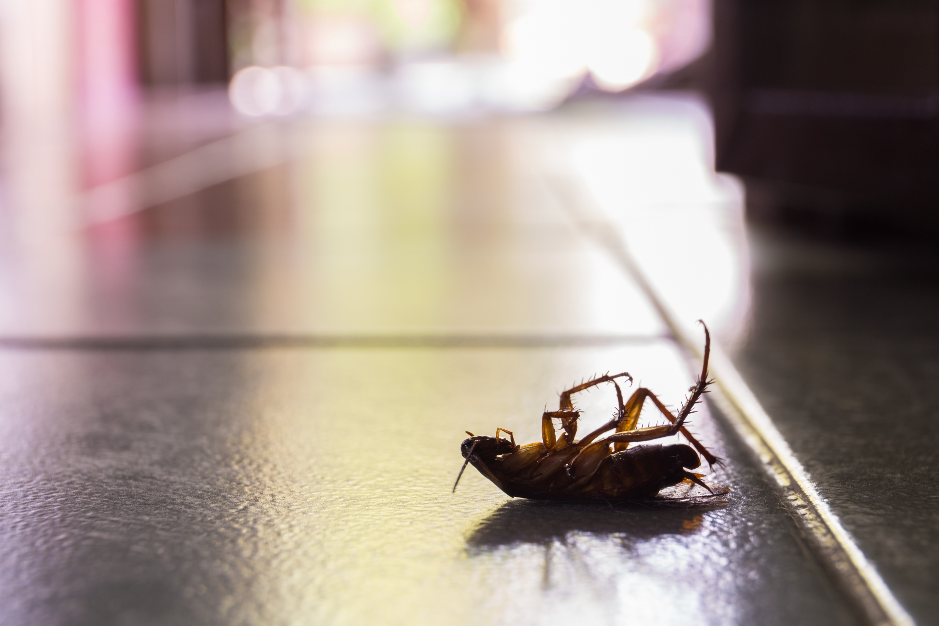 Cockroach Control, Pest Control in Southfleet, Meopham, DA13. Call Now 020 8166 9746