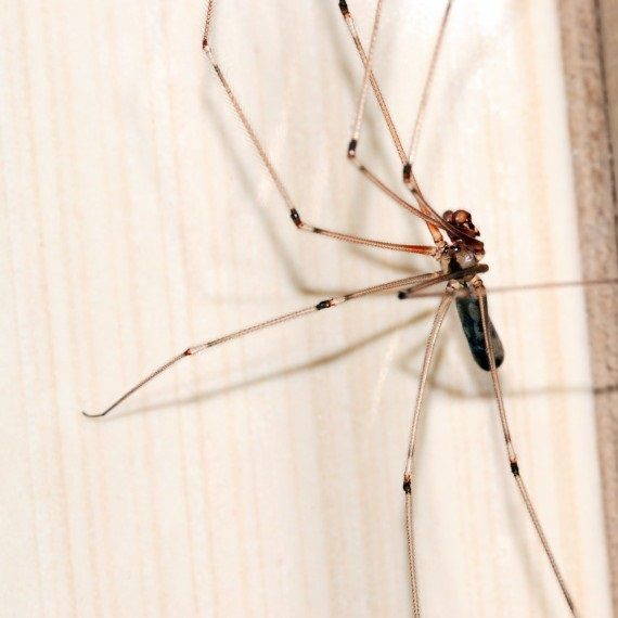Spiders, Pest Control in Southfleet, Meopham, DA13. Call Now! 020 8166 9746