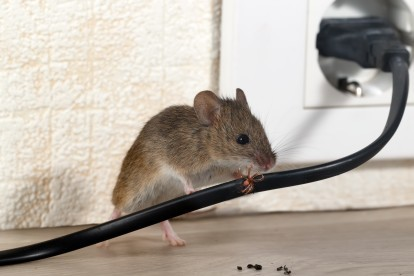 Pest Control in Southfleet, Meopham, DA13. Call Now! 020 8166 9746